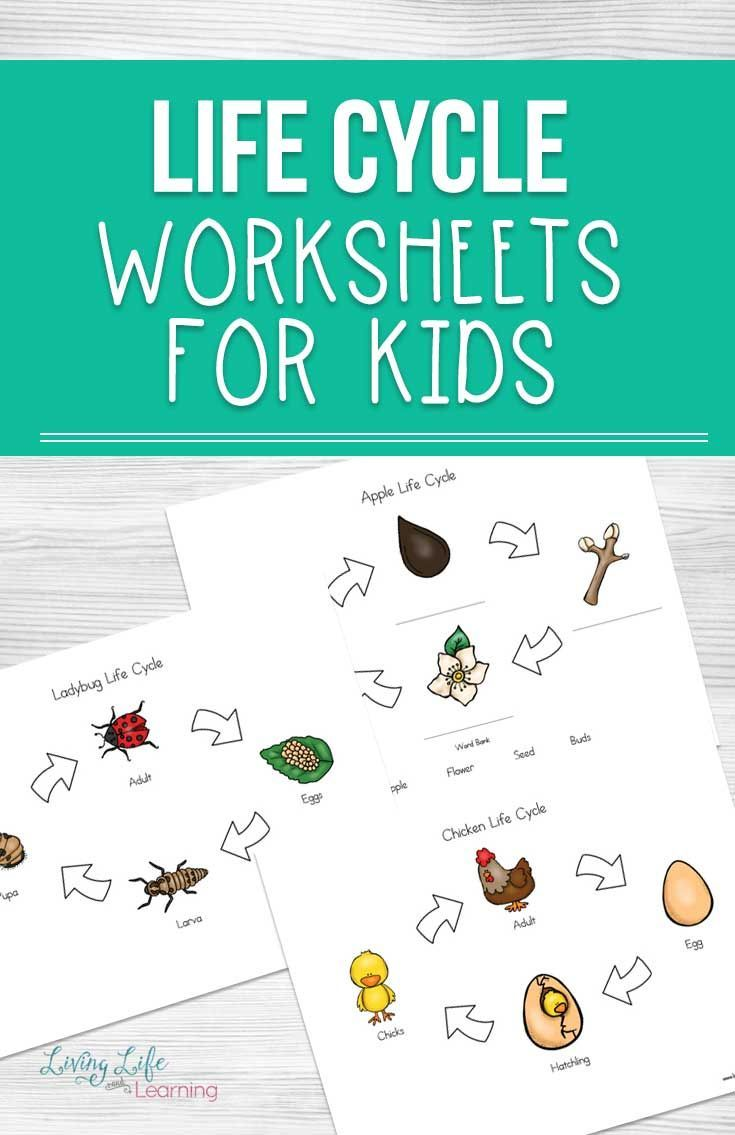 Life Cycle Worksheets For Kids Plant Life Cycle Worksheet Life Cycles Worksheets For Kids [ 1135 x 735 Pixel ]