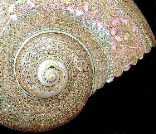 shesellsseashells | Flickr - Photo Sharing!