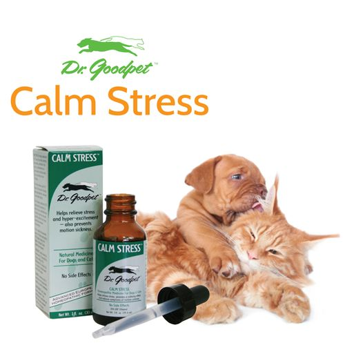 Natural Treatment For Nausea In Cats