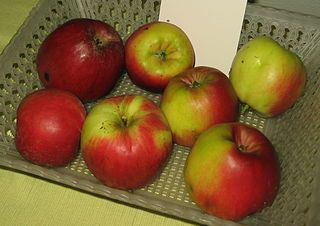 Freezing Apples - How To Freeze Apples