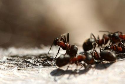 Cómo mantener a las hormigas lejos del cuenco de comida del perro | eHow en Español