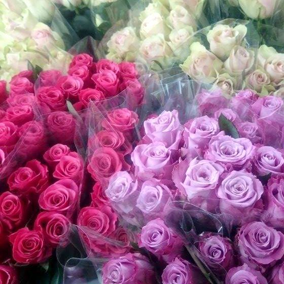 Bilderesultat for lilla roser