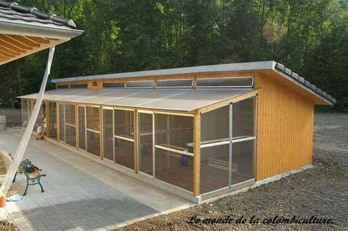 Pigeon loft with nice covered avery