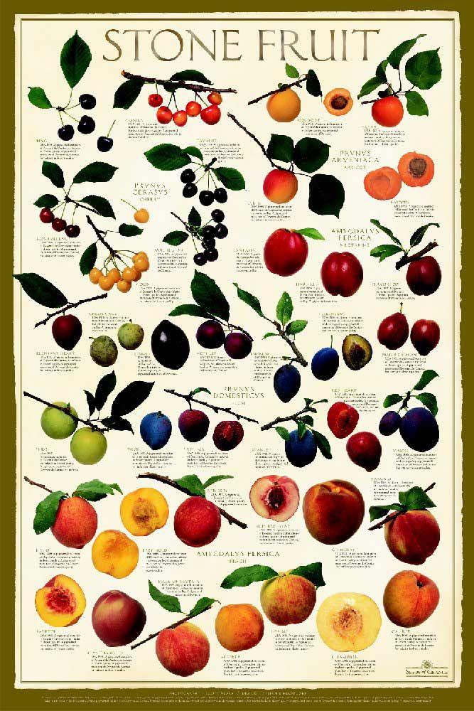 UMD Cooperative Extension - Stone Fruit Troubleshooting.