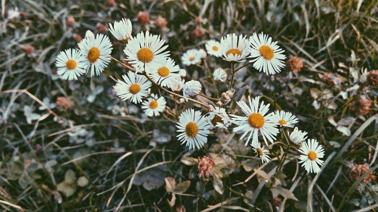 #grungeflowers