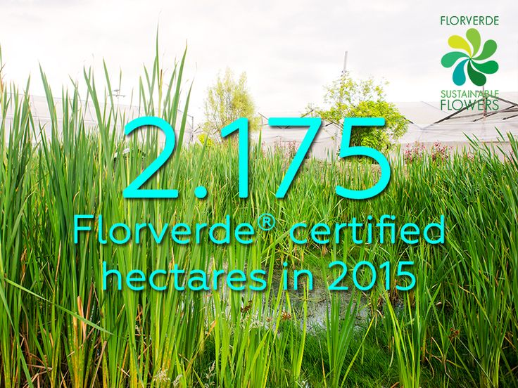 #DidYouKnow that Florverde have certified more hectares of land than 5x the size of Monaco?