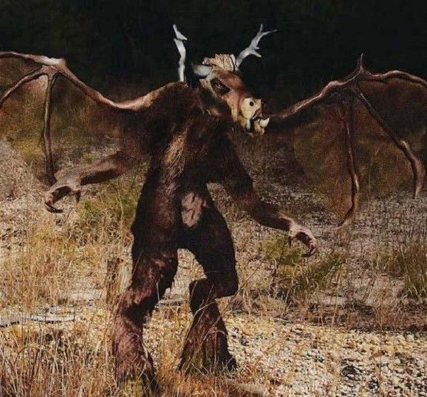 The Jersey Devil is a legendary creature or cryptid said to inhabit the Pine Barrens of Southern New Jersey, United States. Description from pinterest.com. I searched for this on bing.com/images