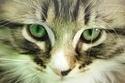Kitten Does Not Trust Sneezing