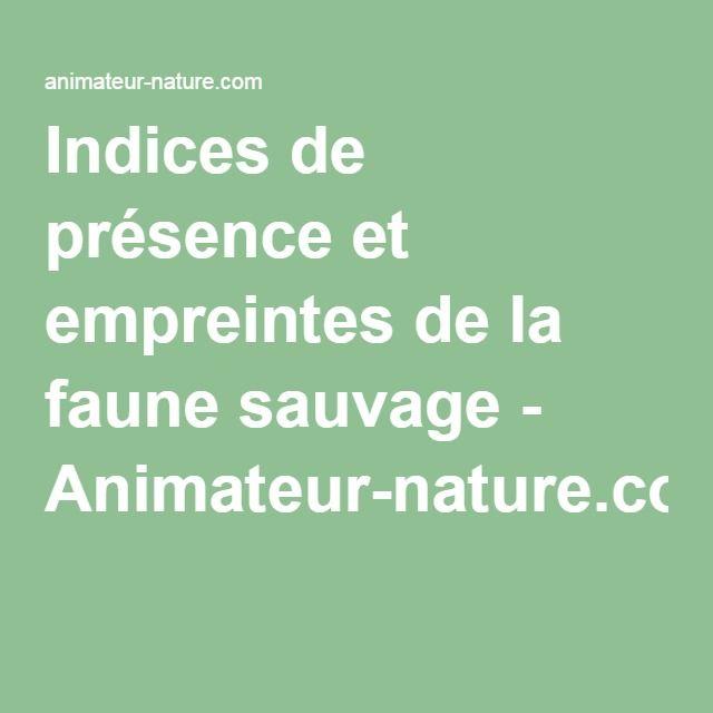 Indices de présence et empreintes de la faune sauvage - Animateur-nature.com