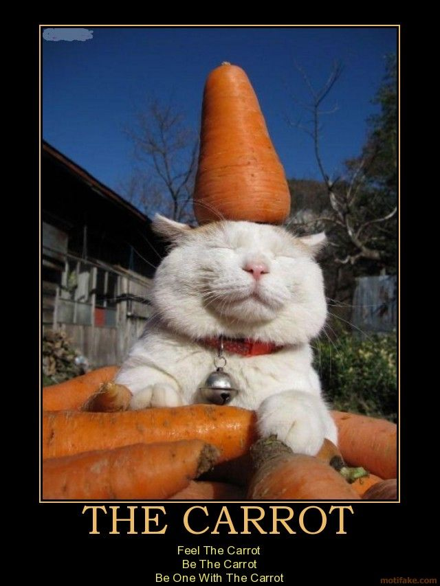THE CARROT Feel The Carrot Be The Carrot Be One With The CarrotFunny Cat, Facebook Comments, Mondays Motivation, Carrots Feelings, Carrots Cat, Funny Stuff, Farmers Marketing, Funny Animal, Apartments