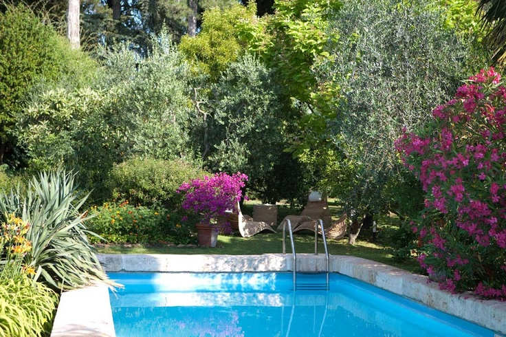 Wedding in Italy, Tuscany - swimming pool in the garden and olive trees