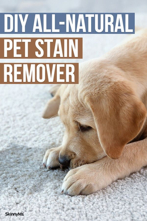 Diy All Natural Pet Stain Remover In 2020 Natural Pet Stain Remover Remove Pet Stains Natural Pet