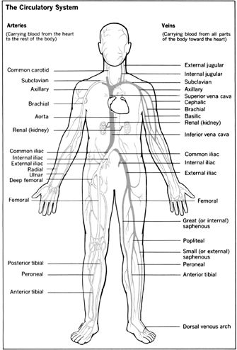 155 best Anatomy & Physiology images on Pinterest