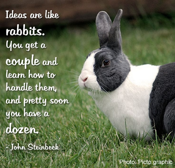 9 Best Inspirational Pet Quotes Images On Pinterest