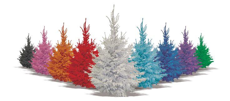 sapins floques Sapins de Noel - Christmastrees - Nordmann - Boules de Noel - Articles de Noel
