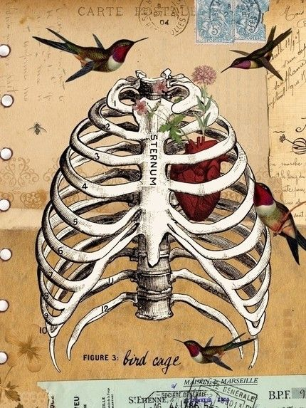 .Birds Cages, Heart, Alicia Caudl, Bones, Birdcages, Art Prints, Collage, Bird Cages, Ribs Cages