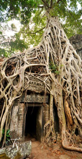 Ta Prohm, Siem Reap. Cambodia.                                                                                                                                                                                 More