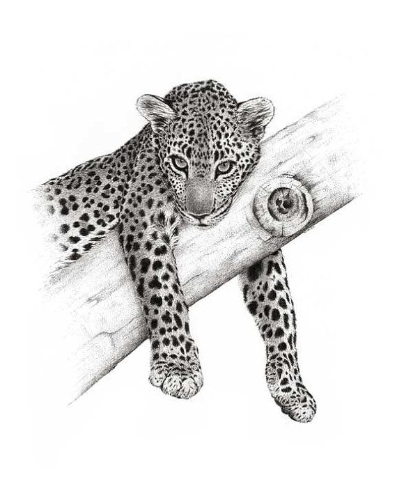 Artwork Leopard Come Up and See Me. Limited by DaisyClaridge