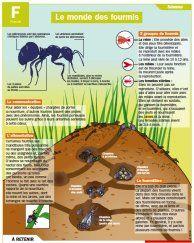Le monde des fourmis