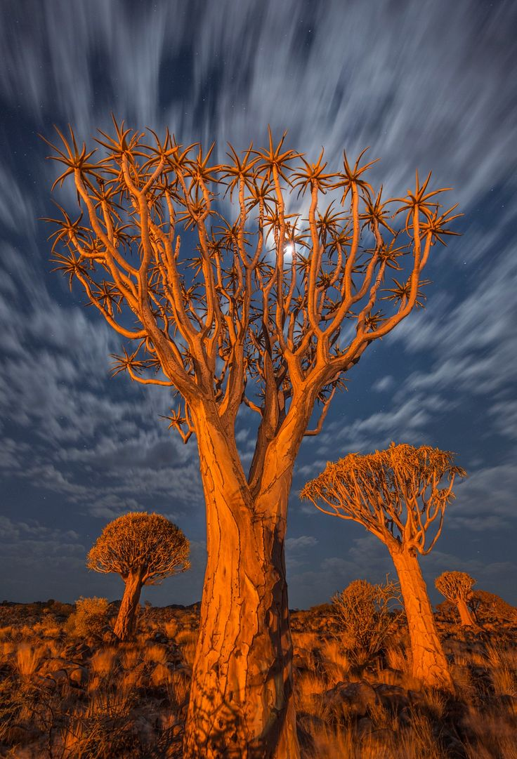 Kneel Before Zod - Quiver Tree Forest at night, Namibia.