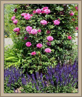 133 best garten m images on pinterest plants arctic. Black Bedroom Furniture Sets. Home Design Ideas