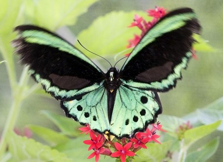 https://flic.kr/p/3bNgje   Butterfly   Butterfly World Coconut Creek, FL Thanks for looking!
