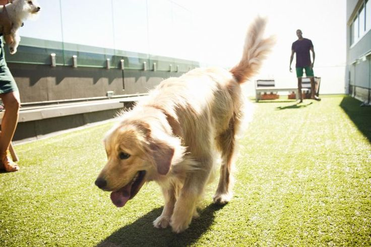 DOG PARK on the roof--LA's Best Rooftop Park | Amenities | Hollywood Penthouses | Hotel Residences Los Angeles | Luxury Condos | The Residences At W Hollywood