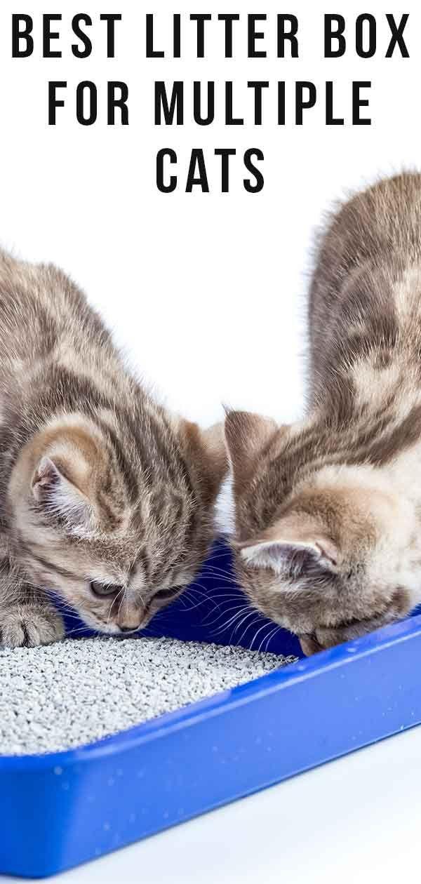 Reviews Archives The Happy Cat Site Best Litter Box Best Cat Litter Cats