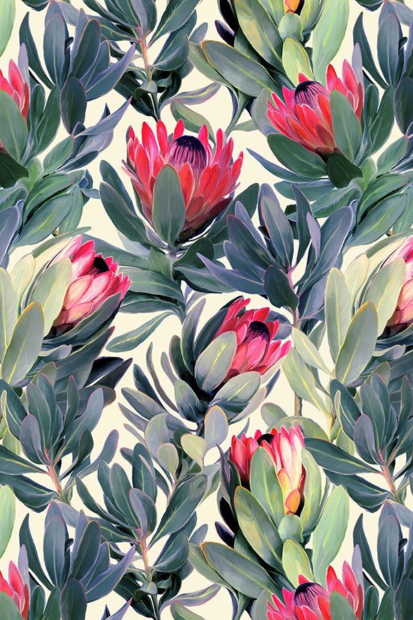 Painted Protea Floral by micklyn - Blue, rose, and cream floral pattern on fabric, wallpaper, and gift wrap.  Beautiful bold florals perfect for throw pillows or kitchen wallpaper.