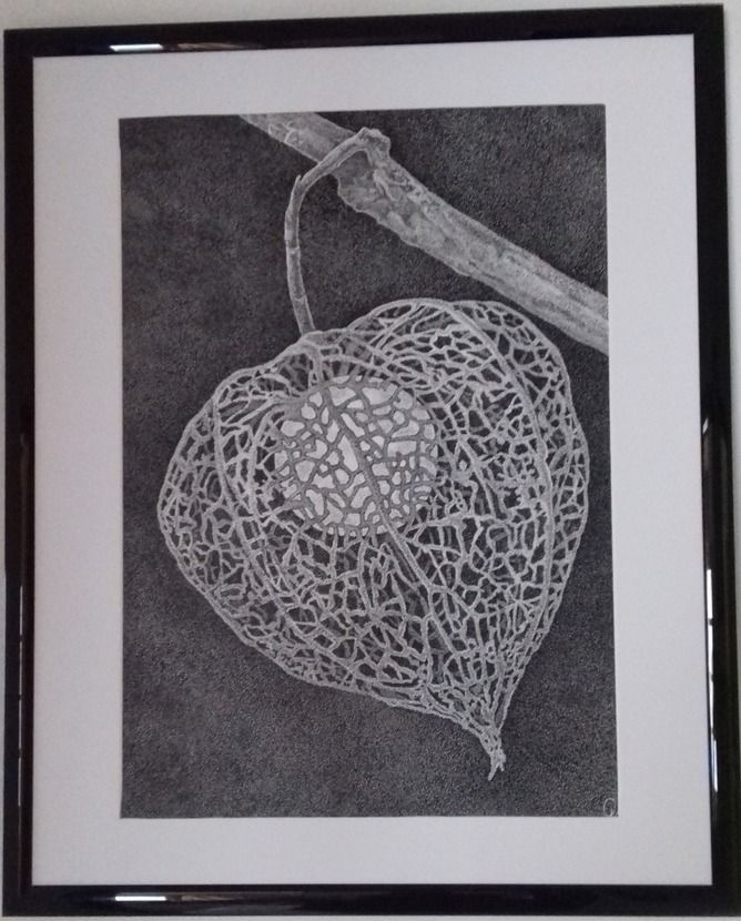 Olga KOSTENKO - Physalis - Artists & Illustrators - Original art for sale direct from the artist