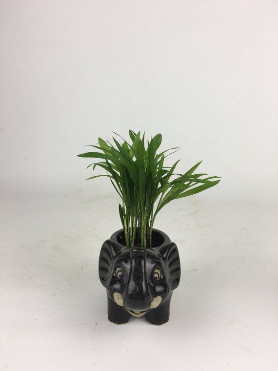 Pottery Cute Black Elephant With Mini Palm Tree Animal Planter Pen Holder Vase Unique Gift Chirstmasgift Indoorplant Dishgarden Officeplant