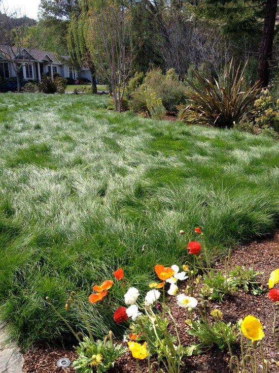 1000 Images About Back Yard Ideas No Mow Lawn Dog