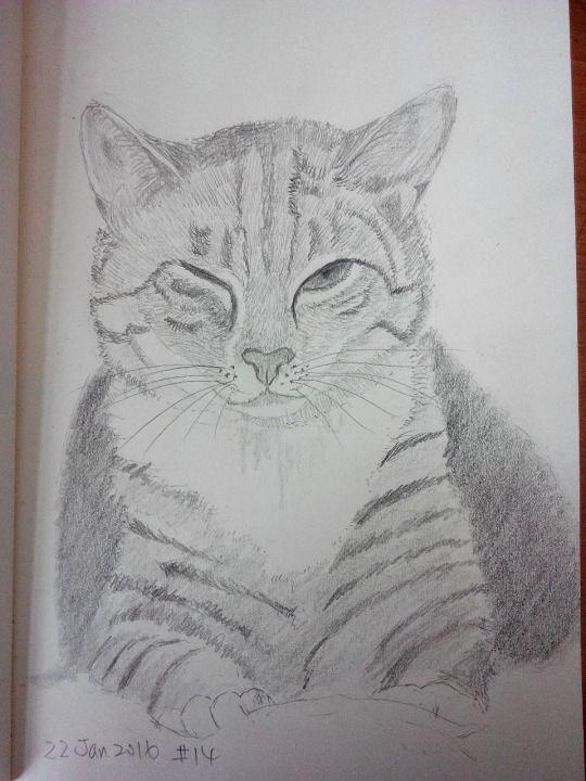 Cat sketching practice #014