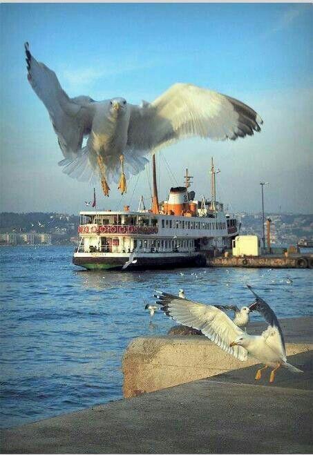 İstanbul.Dilek GÜRGÖL
