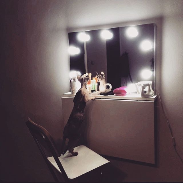 Even catts approves our job :3 Modern 50x70cm makeup mirror and 10 LED light bulbs. Handmade in ZAP project http://zapproject.pl/