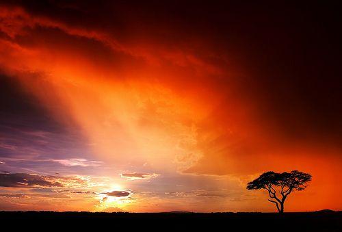 Africa...I sooo want to go!!!!!
