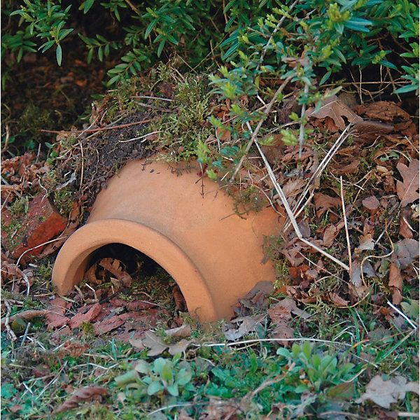 Hedgehogs are a protected species (as well as helping you in the garden by eating snails). They need some sort of... - Ceramic Hedgehog House
