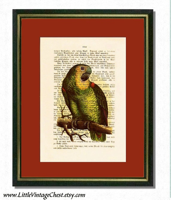GREEN PARROT   Dictionary art Vintage art by littlevintagechest, $7.99