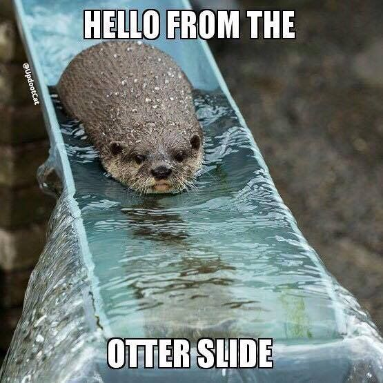 48 best Otter puns images on Pinterest | Otter, Otters and ...
