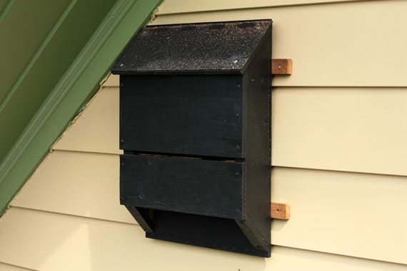 """We love bats - they kill pesky bugs and have the awesome name """"balled mouse"""" in french! Here's a DIY on how to build a bat-house for your backyard."""