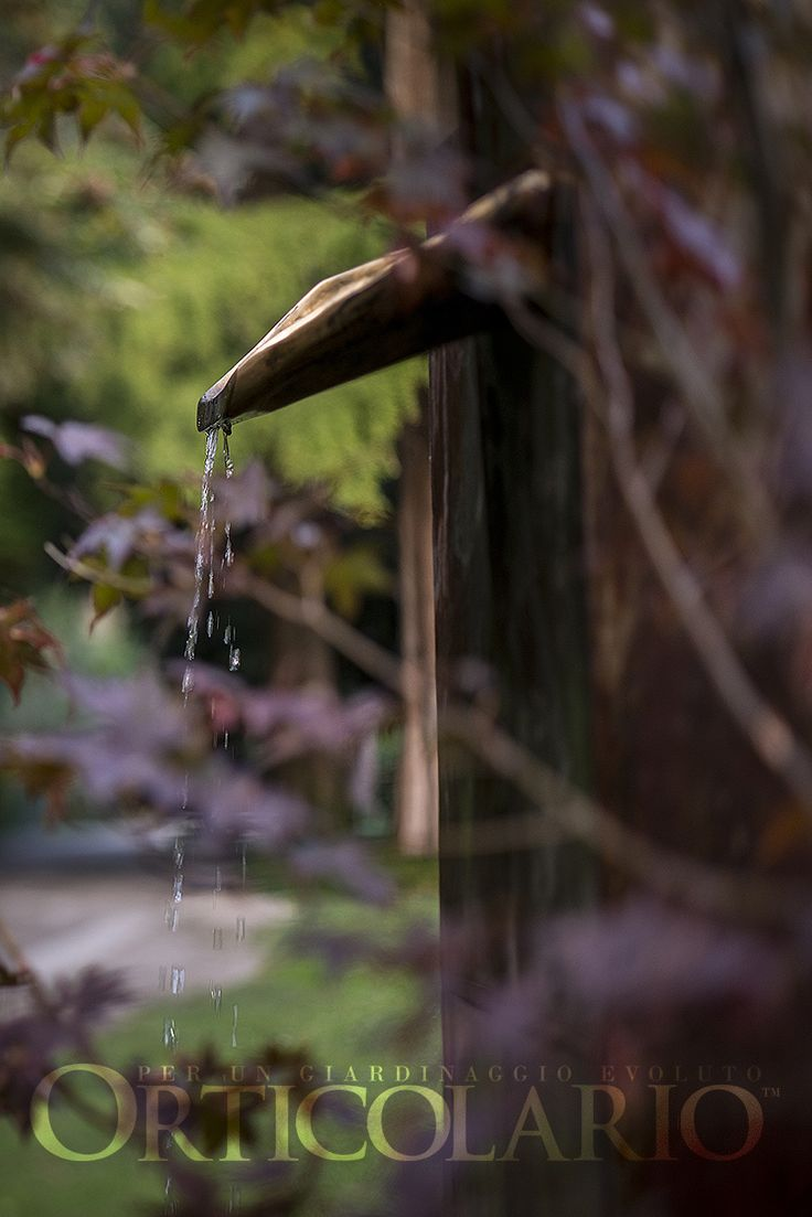 Ecco la Gallery 'Orticolario 2016: Spazi Creativi' con le foto di Luigi Fieni, fotografo ufficiale e Luciano Movio Photographer.  #photography #art #garden #gardening #nature #amazing #flower #outdoor #landscape #flower #herb #plants #design #ideas #inspiration #tree