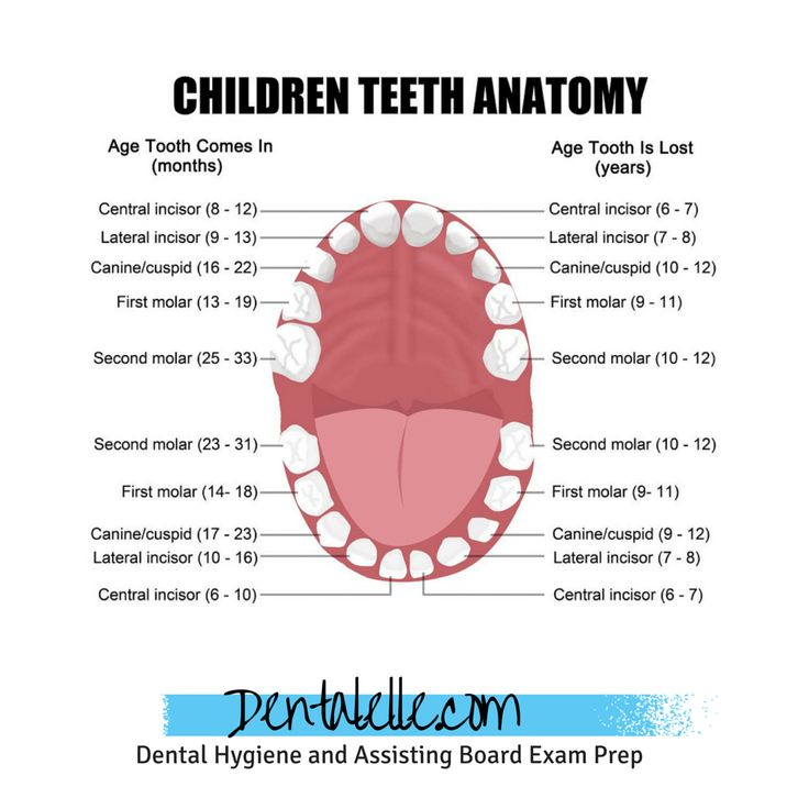 Dental Hygiene and Dental Assisting Tutoring for students online!  99.3% success rate in helping students pass the board exams.  Visit www.dentalelle.com