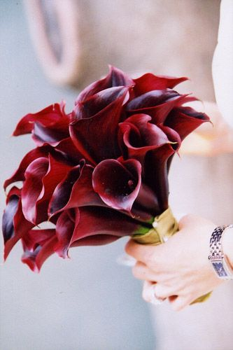 dark red/burgundy calla lilies.. Love the color
