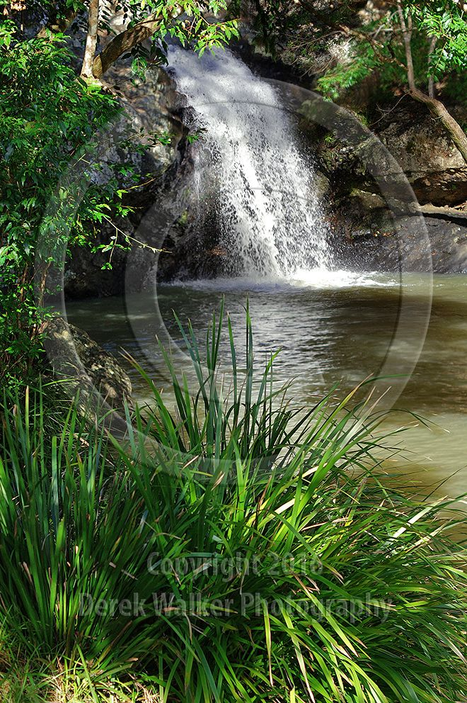 The popular swimming hole at the top of Kondalilla Falls, inside the Kondalilla National Park near Montville on the Blackall Range in south east Queensland, Australia. The National Park is most famous for the spectacular Kondalilla Falls amid lush rainforest (the word Kondalilla is Aboriginal for 'running water'), and is a popular retreat for visitors to the Sunshine Coast hinterland. For image licensing enquiries, please feel welcome to contact me at derekwalker73@bigpond.com  Cheers :)