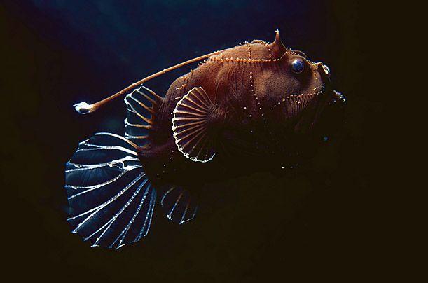 Australia's Deep-Sea Creatures