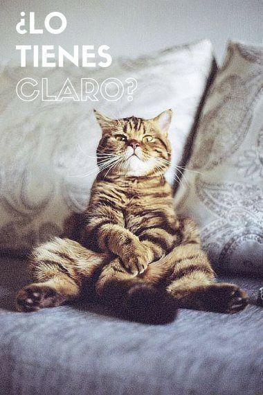 horario gato