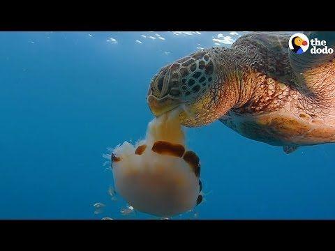 Sea Turtles Diet Confusion