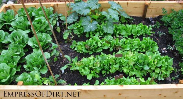 Top 10 vegetables you can grow in the shade gardens for Veggie patch ideas