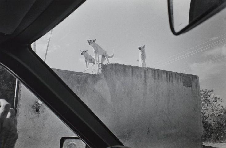 Philip Perkis, Las Juntas, Jalisco, Mexico, 1987
