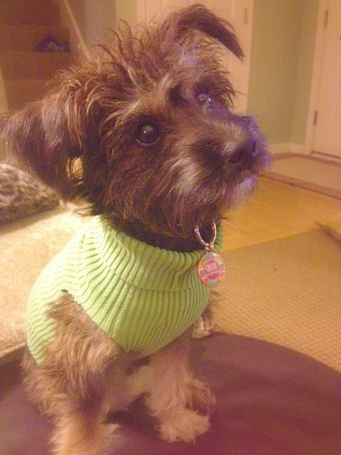 Up-cycle old sweater's and donate to local dog shelters! SMALL dog
